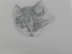 Pencil Drawing of Portia