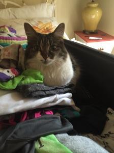 Portia finds a comfy spot