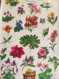 wildflower-poster