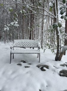 A bench in the woods awaits my contemplation